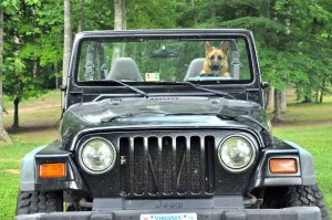 Darby in the jeep